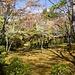 Ahornwald im Garten von Ōkōchi Sansō / 大河内山荘.