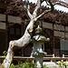 Steinlaterne mit knorrigem Baum vor der Haupthalle des Tempels von Jōjakkō-ji / 常寂光寺.