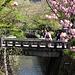 """Am """"Path of Philosophy"""", einem wunderschön angelegten Weg an einem kleinen Kanal, der vom Tempel Eikan-dō / 永観堂 bis zum Tempel Ginkaku-ji / 銀閣寺 führt."""