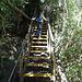 zurück geht es über die Stufen auf den Plankenweg