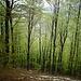 Nei boschi di Cimadera.