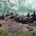 die gibt es bis The Seal/The Point beinahe dauernd zu sehen