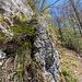 Botanischer Aufstieg auf den nächsten Felsen