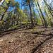 Weglos den Wald hinunter