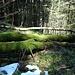 Viel Moos auf den umgestürzten Bäumen