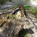 Da hat wohl ein Forstarbeiter viel Zeit und Liebe in die Gestaltung dieses Baumbrunnens gesteckt