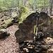 Totholz im Urwald, die Stöcke als Vergleich sind auf 1,45m ausgefahren
