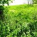 ich bin über diese Wiese gekommen und hier über den Zaun geklettert. Den Abzweig im Wald habe ich erst später gesehen.