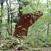 im Büttibode: Kunst im Wald 3