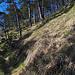 Nahe des Gipfels des Haslihorns. Die Landschaft hat einen südlichen Touch.