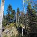 Der Gipfel des Haslihorns befindet sich in einem Baumdickicht