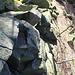 Schweidrich, Gipfel, Balkenlager eines Triangualtionsgerüstes oder Aussichtsturmes