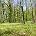 Frühlingswald im Gipfelbereich des Schmidsbergs