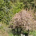 Laube mit Blütendach
