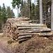 ...Holzlagerplatz. Von hier müßte eigentlich lt. Karte eine Straße (oder Karrenweg) den Ostgrat des Brunstkogels hinaufführen, aber sie ist nicht zu finden.