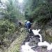Aufstiegsweg, teilweise mit bequemen Treppen....