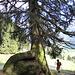 Baum frisst Fels