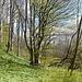 zurück im lauschigen Wald ...