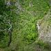 """Val Meria: lì passa il """"sentiero del fiume""""."""