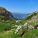 Vom Mutschensattel geht es über das Bergtal Gruebe zur Teselalp und nachher über das Flüretobel nach Wildhaus