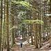 La splendida foresta delle Agoraie.