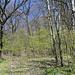 Unterwegs am Pákova hora - Nach dem Überqueren der Wiese geht's in den Wald hinein, wo wir uns gleich rechts halten.