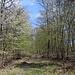 Unterwegs am Pákova hora - Am Wegrand blühen derzeit hier und da Vogel-Kirschen.
