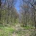 Unterwegs am Pákova hora - Auf breitem Weg geht's in der Regel allmählich bergan.