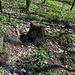 Unterwegs am Pákova hora - Immer wieder sind Wühlstellen zu sehen. Im Wald leben u. a. zahlreiche Wildschweine, die uns später noch begegnen.