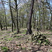 Pákova hora - Blick auf den Gratrücken, der vom Gipfel etwa nach Nordwesten/Westen zieht.