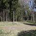 Unterwegs zwischen Pákova hora und Setenka - Hier zweigt nach links eine weitere Piste ab. Geradeaus ginge es in Richtung Lipská hora (unser Rückweg). Wir gehen aber weder nach links noch geradeaus. Vielmehr verlassen wir abermals den Weg, um im Wald zum Gipfel des Setenka zu gehen.