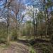 Unterwegs zwischen Setenka und Táhlina - Zwischendurch folgen wir eine Weile dem breiten Forstweg.