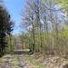 Unterwegs zwischen Setenka und Táhlina - Kurz vor Einmünden des Forstweges in ein asphaltiertes Sträßchen.