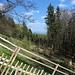 Unterwegs am Táhlina - Seitenblick während des steilen Aufstiegs zwischen den Schonungen.