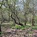 Unterwegs am Táhlina - Durch stellenweise wild anmutenden Laubwald geht's über den weitläufigen Gipfelbereich.