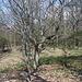 Táhlina - Neben Eichen wachsen u. a. auch viele Buchen im Gipfelbereich.