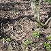 Unterwegs am Táhlina - Auch hier gibt's wieder etliche Wühlspuren auf dem Waldboden. Die offenbar dazugehörigen Wildschweine haben wir mehrfach gesehen.