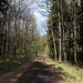 Unterwegs zwischen Táhlina und Lipská hora - Zurück auf dem asphaltierten Waldsträßchen. Unser nächstes Ziel ist nun der Lipská hora. Erst einmal geht's aber ein Stück zurück in Richtung Setenka/Süden. Rückblick.