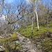 Im Aufstieg zum Lipská hora - Kurz vor Ankunft am Gipfel.