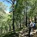 Bellissimo bosco di Betulle a 20 min dal parcheggio
