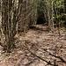 Direkt gegenüber geht' s los! Der Holzerstich verliert sich und der Gratanstieg ist in einer kurzen Passage etwas stachelig und verwachsen. Doch nach wenigen Schritten...