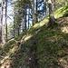 ...lichtet sich der Wald und der Anstieg wird zu einem reinen Vergnügen! Manchmal finden sich auch zerstreute Pfadspuren.