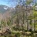 Auf dem Weg in eine Senke kann ich im Osten schon den Breitenstein sehen. Auf diesem letzten Abschnitt gibt es einige Bäume zu übersteigen.