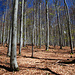 Wald, Bayerischer