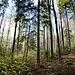 Frischer Wald im Wald