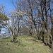 Táhlina - Im Westen des Gipfelbereichs, unweit des Vermessungspunktes. Noch tragen wenige Bäume Blätter. Weit geöffnete Knospen deuten aber an, dass sich das bald ändert.