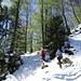 frisches Buchengrün - über der beachtlichen Schneeauflage ...
