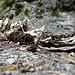 <br />Ein Tannenzapfen bei den Blättern beim täglichen Tratsch ;-))