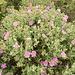 Blütenpracht anstatt weiter Landschaftseindrücke.