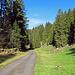 zuerst geht es ein paar hundert Meter auf einer geteerten Alpstrasse durch den Wald, bevor es auf einem Waldweg rechts den Wald hinauf geht.